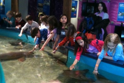 Seals and second graders: grade's first field trip is to Norwalk Aquarium
