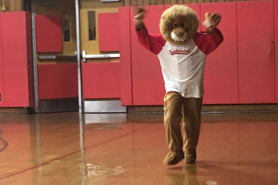 Charlie the Cougar does what cougars in the Colonial gym.