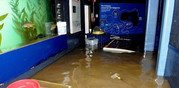 The flooded New York Aquarium.