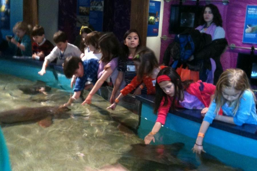 Second graders were able to pet the rays at Norwalk Aquarium.