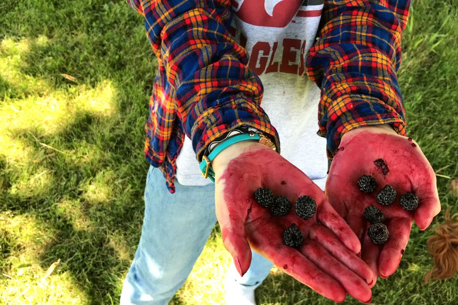 Picking black raspberries and making jam during annual trip to Illinois